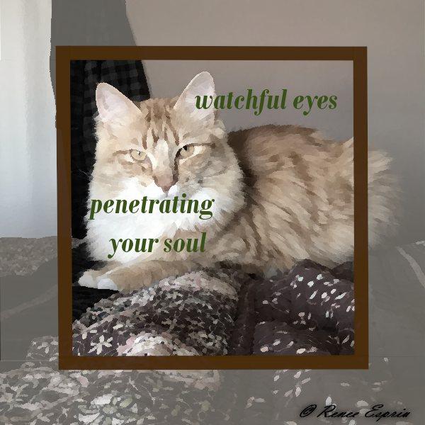 Archie Eyes